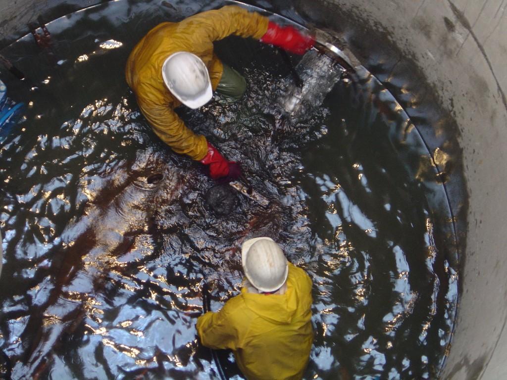 Fonçage de drains à la presse